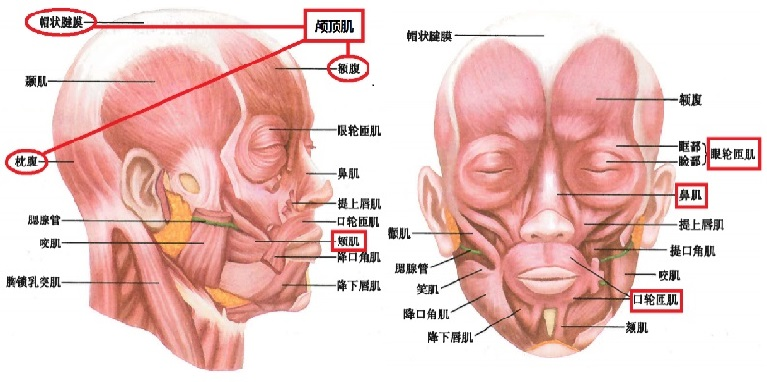 面部痉挛2
