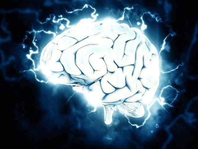 中枢神经系统